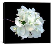 White Flora, Canvas Print