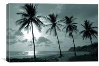 Duotone Palm Trees