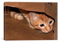 Kitten in a Bag, Canvas Print