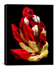 Rhodidendron Bud Posterized 2, Canvas Print