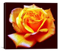 Modified Rose, Canvas Print