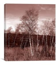 Birches Duotone, Canvas Print