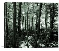 The Forest- Duo Tone, Canvas Print