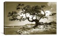 Tree on Beach at Treasure Beach, Jamaica