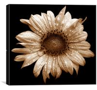 Tritone Sunflower