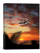 Colorful Sunset with Bird , Canvas Print
