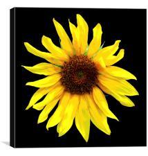 Glorious Sunflower