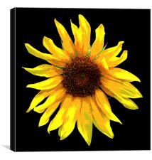 Revised Sunflower , Canvas Print