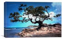 Grand Tree at Treasure Beach