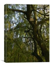 Autumn Willow, Canvas Print