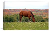 Wild Horse, Canvas Print
