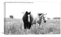 Wild Horses, Canvas Print