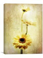 Summer Daisies, Canvas Print