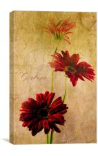 Trio Of Red, Canvas Print