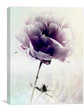 Lavendar Blue, Canvas Print