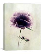 Precious Peony, Canvas Print