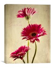 Gerbera Fountain, Canvas Print