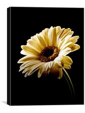 Floral Highlights, Canvas Print