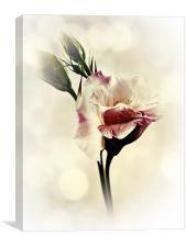 Lovely Lisianthus, Canvas Print