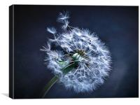 Dandelion Blues, Canvas Print