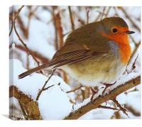 A Robin In The Snow., Canvas Print