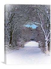 A Winter's Walk In Snowy Scotland., Canvas Print
