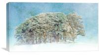 Snow Flakes Fall., Canvas Print
