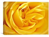Golden Rose Petals., Canvas Print