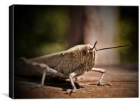 The Locust Siesta, Canvas Print