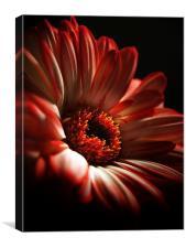 A Floral Redhead, Canvas Print