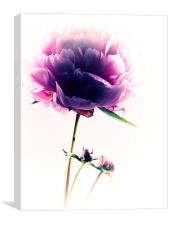 Simply Pink, Canvas Print