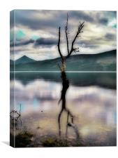 Lone Tree on Loch Rannoch, Canvas Print