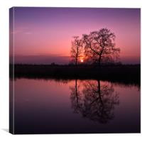 Tree Sunset, Canvas Print