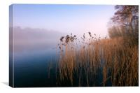 Reeds at Ormesby Little Broad, Canvas Print