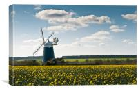 Burnham Windmill oilseed rape field, Canvas Print