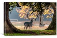 Fallow Deer at Holkham Hall, Canvas Print