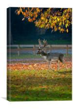 Fallow deer at Holkham, Canvas Print