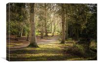 Fairhaven Woods, Canvas Print