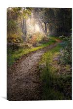 Enchanted lane at Filby, Canvas Print