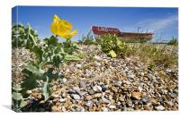 Beached boat and sea poppy, Canvas Print