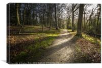 Woodland Walk at Fairhaven