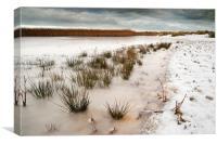 Frozen salt marsh, Canvas Print