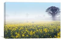 A foggy morning over a field of rape, Canvas Print