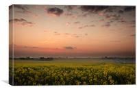 Dawn over the oil seed, Canvas Print