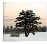 Cold Winter Morning in Maine, Canvas Print