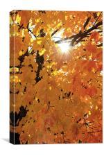 Fall Warmth, Canvas Print