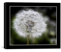 Dandelion Clock, Canvas Print