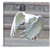 Wing and a prayer., Canvas Print