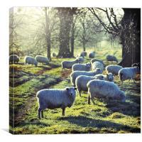 Good Morning to Ewe, Canvas Print