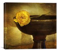 A single rose, Canvas Print
